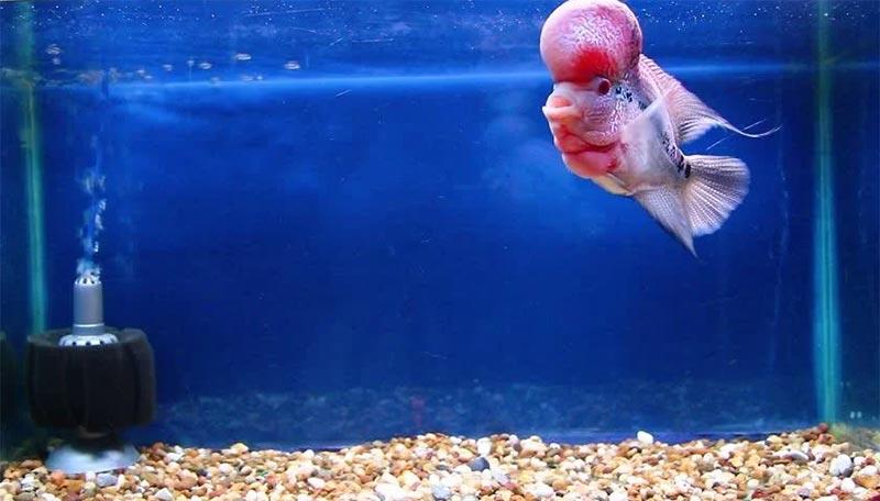 Bể nuôi cá la hán