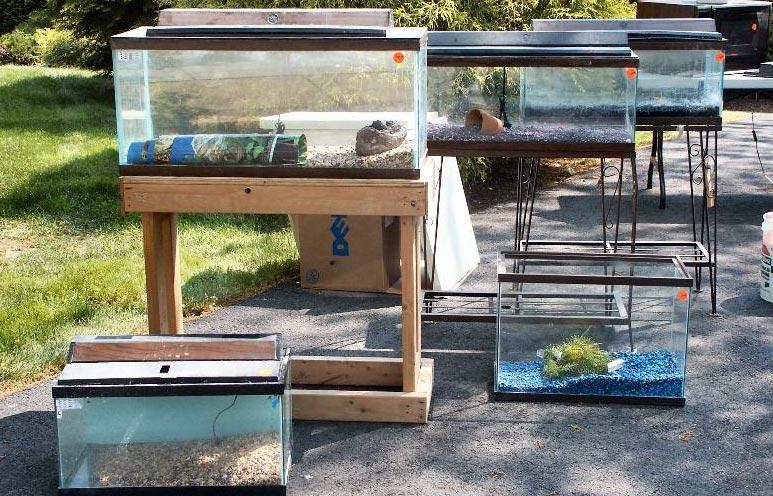 Bể cá thủy sinh có nhiều kích thước khác nhau